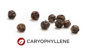 Terpene CARYOPHYLLENE