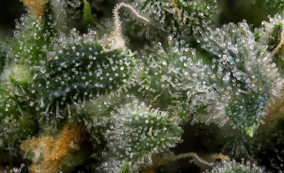 Terpenes CBD Article Guide du CBD