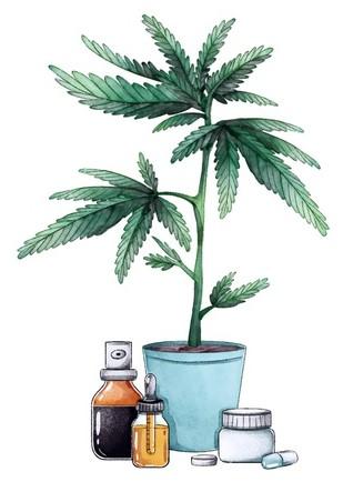 Fiche botanique du cannabis